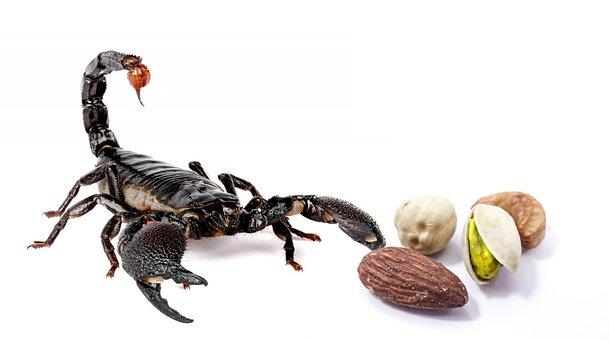 Hazelnuts, Scorpio, Food, Danger, Nuts, Pistachio