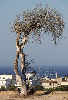 Dead Tree, Sea, Greece, Horizon House, City, Views