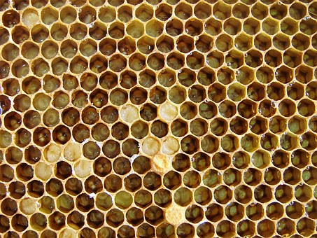 The Bees, Larvae, Hatching, Insect