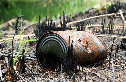 Burnt, Renewal, Veldt, Growth, Fire, Destruction