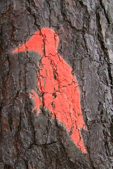 Tree, Log, Woodpecker, Bird, Mark, Forestry, Nature