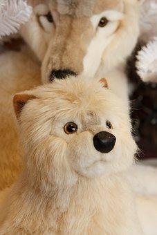 Adorable, Animal, Arctic, Baby, Beautiful, Christmas