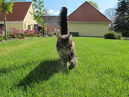 Cat, Birkende Farm Shop, Birkende
