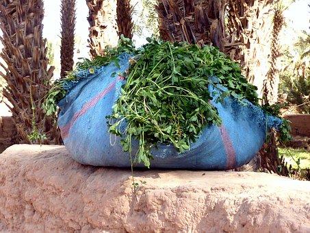 Fresh Coriander, Colors, Spices, Morocco