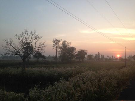 Sunrise, Early Bird, Wildlife, Country Side