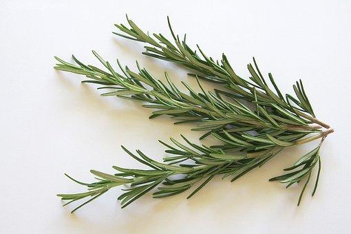 Rosemary, Spice, Kraeuer, Food, Eat, Edible