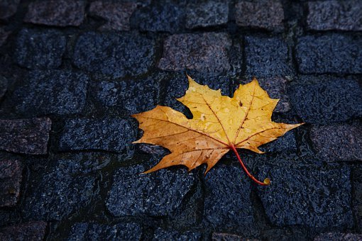 Autumn, Beauty, Close-up, Color, Drop, Fall, Leaves