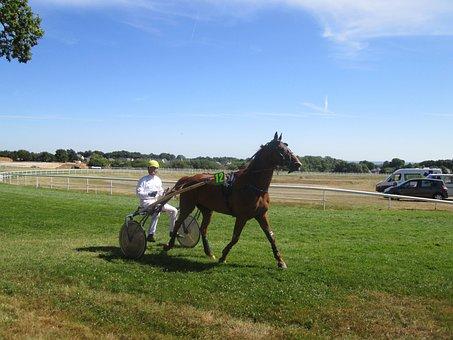 Horse, Echauffement, Hippodrome