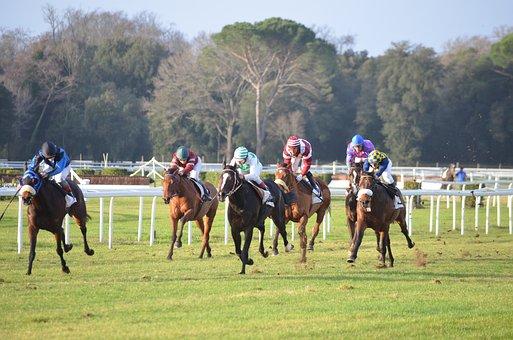 Hippodrome, Corse, Horses