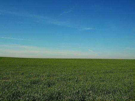 Field, Sky, Heaven, Blue, Meadow, Spring, Clear, Quiet