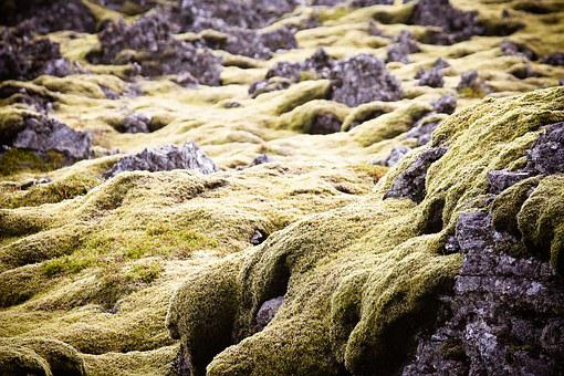 Green, Moss, Iceland, Lava, Rock, Nature, Plant