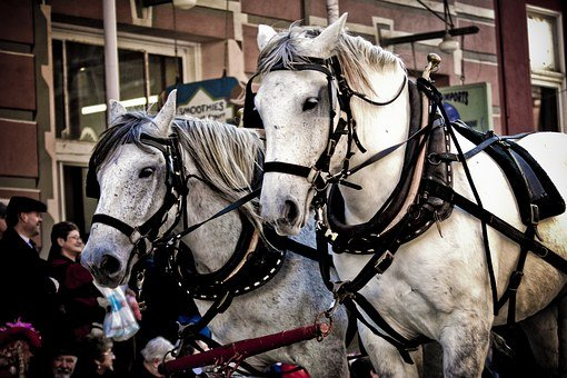Horses, Parade, Halter, Tourism, Animal, Tradition