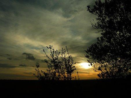 Sunset, Field, Winter, Landscape, Backlight, Olive