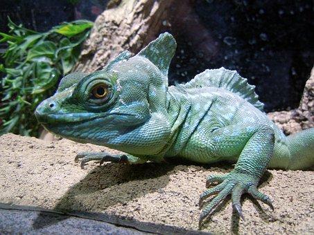 Basilisk, Reptile, Lizard, Green, Monitor