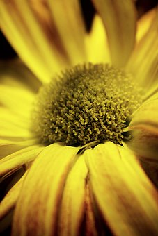 Agapanthus, Hibiscus, Flower, Flora, Bloom, Blossom