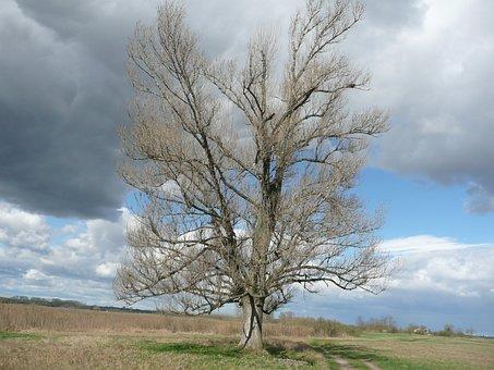 Tree, Mere, Landscape, Nature