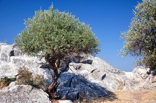 Thassos, Limenas, Olive Tree, Mountain, Rocky, Streets