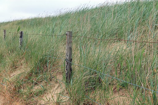 Grass, Landscape, Dune, Beach, Sea, Nature Reserve