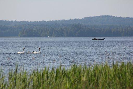 Swan, Boat, The Boatman, Peace, Silence, Lake, Reed