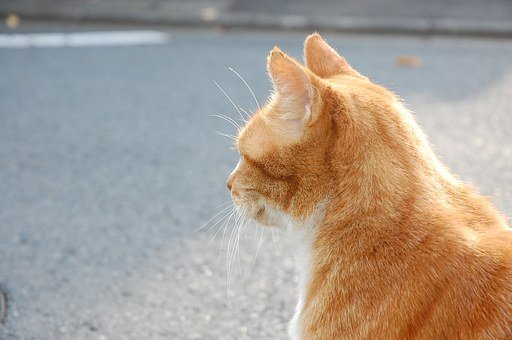 Cat, A Philosophical, On The Roadside, Road