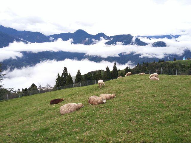 Cloud Of Sea, Sheep, Cingjing, Landscape
