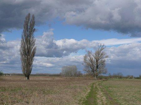 Landsape, Nature Mere, Tree, Sky