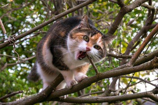 Cat, Climb, Aesthetic, Lucky Cat, Domestic Cat, Tree