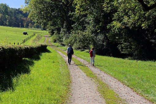 Nature, Hiking, Walk, Leisure, Recovery, Away, Lane