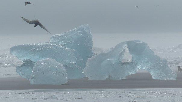 Iceland, Iceberg, Bird, Tern