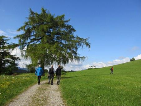 Tree, Larch, Wanderer, Away, Meadow, Sky, Blue
