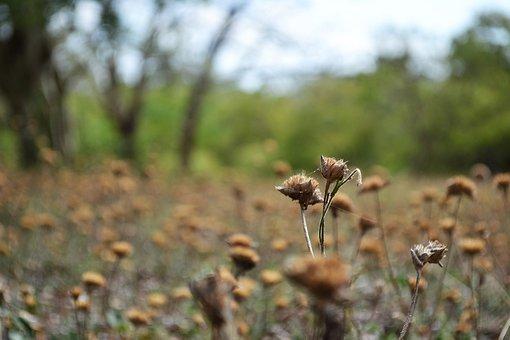 Dried Flowers, Dried Garden, Haunted, Empty, Sarrow