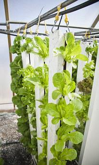 Vertical Farm, Hydroponics, Farming, Plants, Lettuce