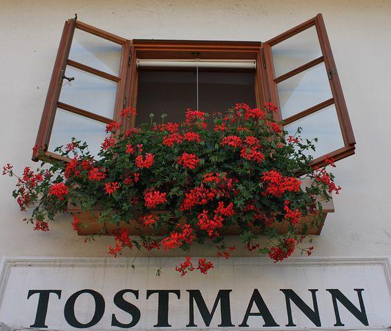 Costume Shop, Window, Outlook, Flower