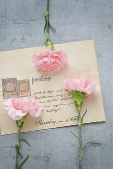 Flowers, Cloves, Pink, Cut Flowers, Font, Receipt