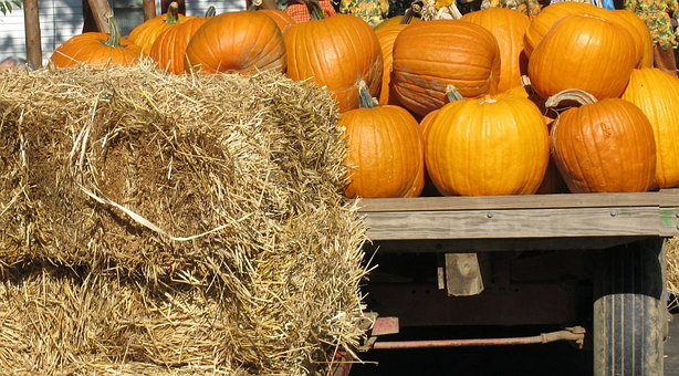 Pumpkins, Straw, Cart, Fall, Autumn, Fruit