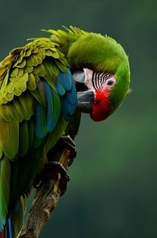 Parrot, Bird, Colorful, Plumage, Animal, Green, Clean