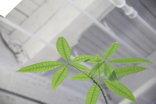Plant, Leaves, Indoors, Green, Environment, Fresh