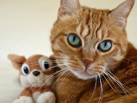 Cat, Small Cat, Cat's Eye, Feline, Red Cat, Kitten