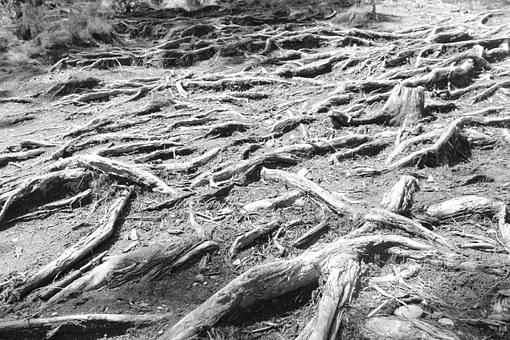 Black And White, Root, Cold, Only