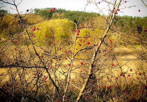 Plein Air, Wild Rose, Bush