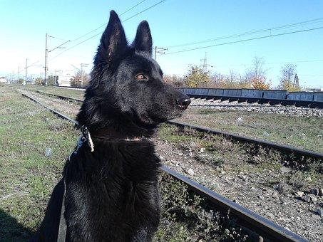 My, Dog, Artemis