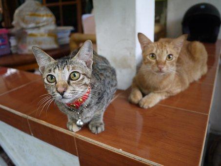 Cat, Bali, My Home