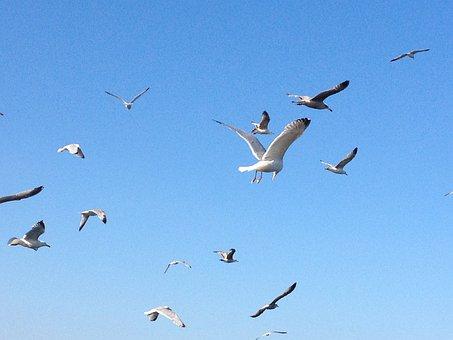 Birds, Flying, Nature, Flight, Wings, Beak, Flock, Dove