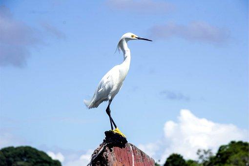 Heron, White, Bird, Boipeba, John Santos