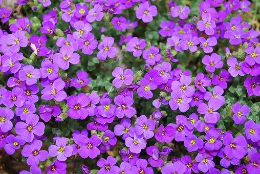 Flower, Blossom, Wild Flower, Floral, Summer, Natural