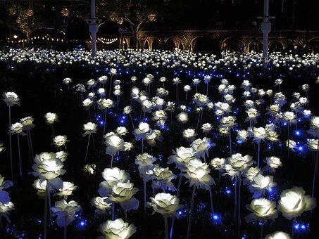 Night, Everland, Lighting, Map, Rose, Flowers
