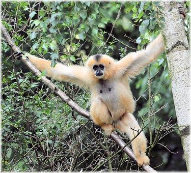 Monkey Business, Zoo, Food, Series, Monkey, Monkeys