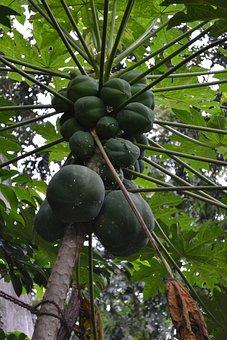 Ceylon Papya, Sri Lanka, Papaya, Fruit, Greet Fruit