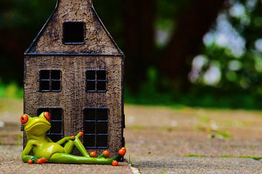 Frog, At Home, My Home Is My Castle, Funny, Fun