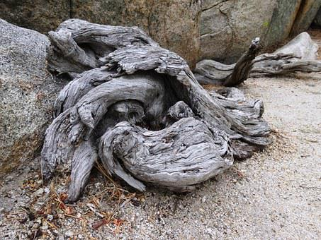 Root, Wood, Old, Death, Nature